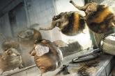 makingof_bumblebees.indd