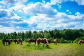 Wa11papers.ru_11_2020_animals_1920x1080_029