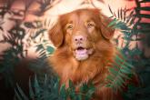 Wa11papers.ru_11_2020_animals_1920x1080_049