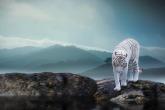 Wa11papers.ru_11_2020_animals_1920x1080_051