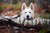 Wa11papers.ru_11_2020_animals_1920x1080_075