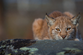Wa11papers.ru_11_2020_animals_3600x2025_086