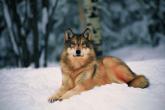 Wa11papers.ru_11_2020_animals_3600x2250_151