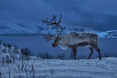 Wa11papers.ru_11_2020_animals_3600x2333_129