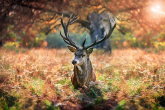 Wa11papers.ru_11_2020_animals_3600x2347_118