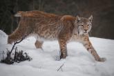 Wa11papers.ru_11_2020_animals_3600x2369_159