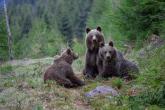Wa11papers.ru_11_2020_animals_3600x2400_103