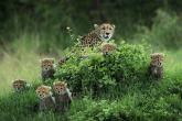 Wa11papers.ru_11_2020_animals_3600x2400_131