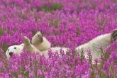 Wa11papers.ru_animals_1920x1200_149