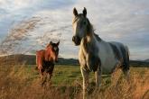 Wa11papers.ru_animals_2560x1579_177