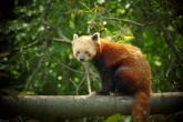 Wa11papers.ru_animals_2560x1600_145