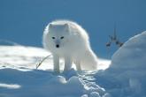 Wa11papers.ru_animals_3008x2000_185