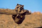 wa11papers-ru_animals_1600x1200_000