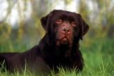 wa11papers-ru_animals_1600x1200_005