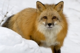 wa11papers-ru_animals_1600x1200_014
