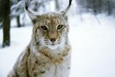 wa11papers-ru_animals_1600x1200_018