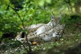 wa11papers-ru_animals_1600x1200_020