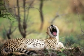 wa11papers-ru_animals_1600x1200_024