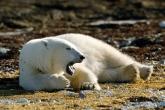 wa11papers-ru_animals_1600x1200_034