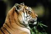 wa11papers-ru_animals_1600x1200_039