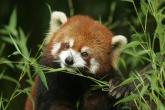 wa11papers-ru_animals_2000x1333_058