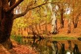 Wa11papers.ru_autumn_landscapes_1600x1200_020