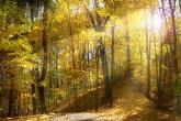 Wa11papers.ru_autumn_landscapes_1920x1080_021