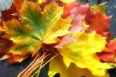 Wa11papers.ru_autumn_landscapes_1920x1200_006