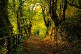 Wa11papers.ru_autumn_landscapes_1920x1200_014