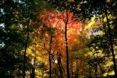 Wa11papers.ru_autumn_landscapes_1920x1200_015