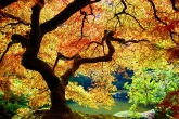 Wa11papers.ru_autumn_landscapes_1920x1200_017