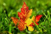Wa11papers.ru_autumn_landscapes_1920x1200_018