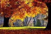 Wa11papers.ru_autumn_landscapes_1920x1200_023
