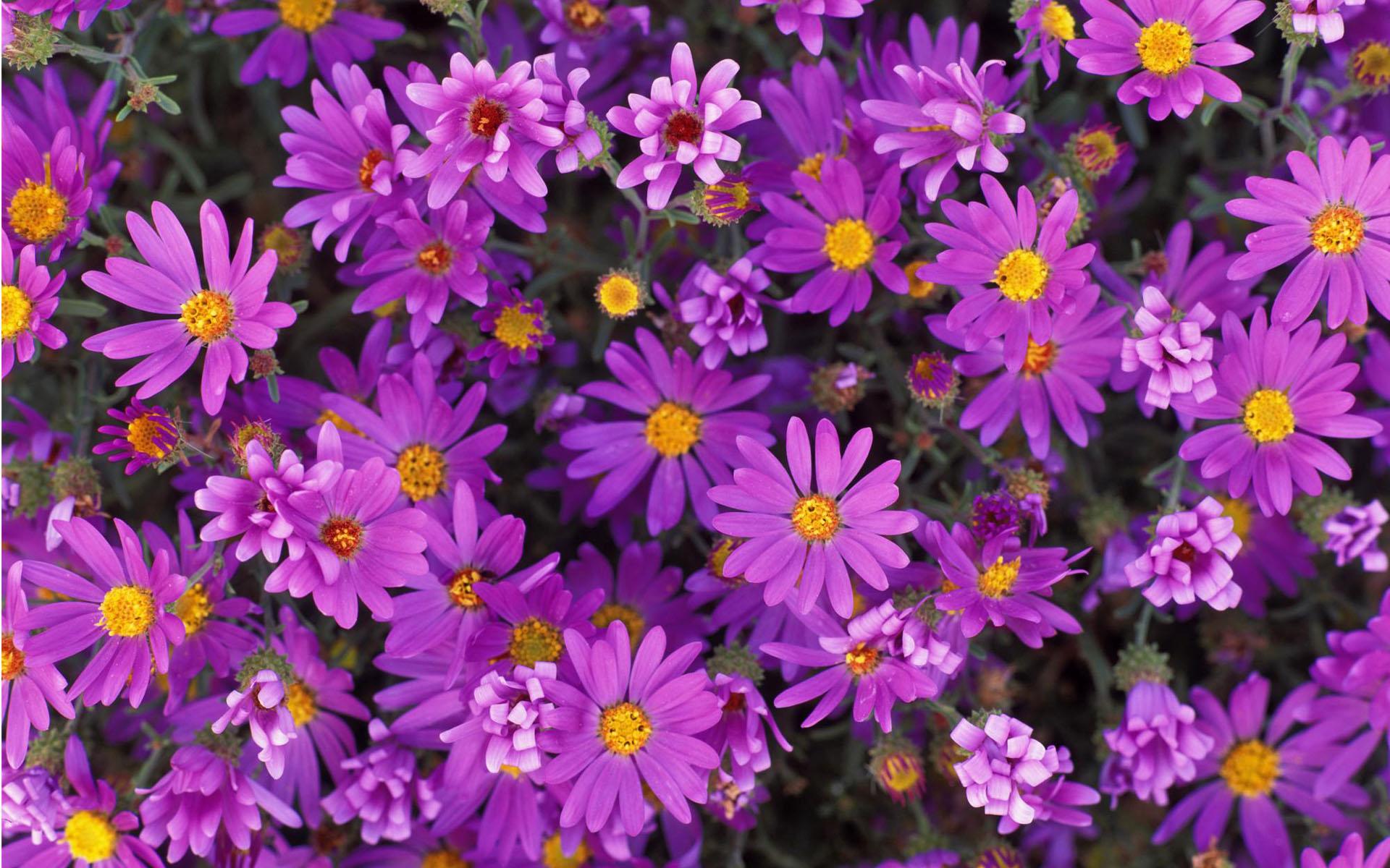 Фото для рабочего стола живые цветы 56