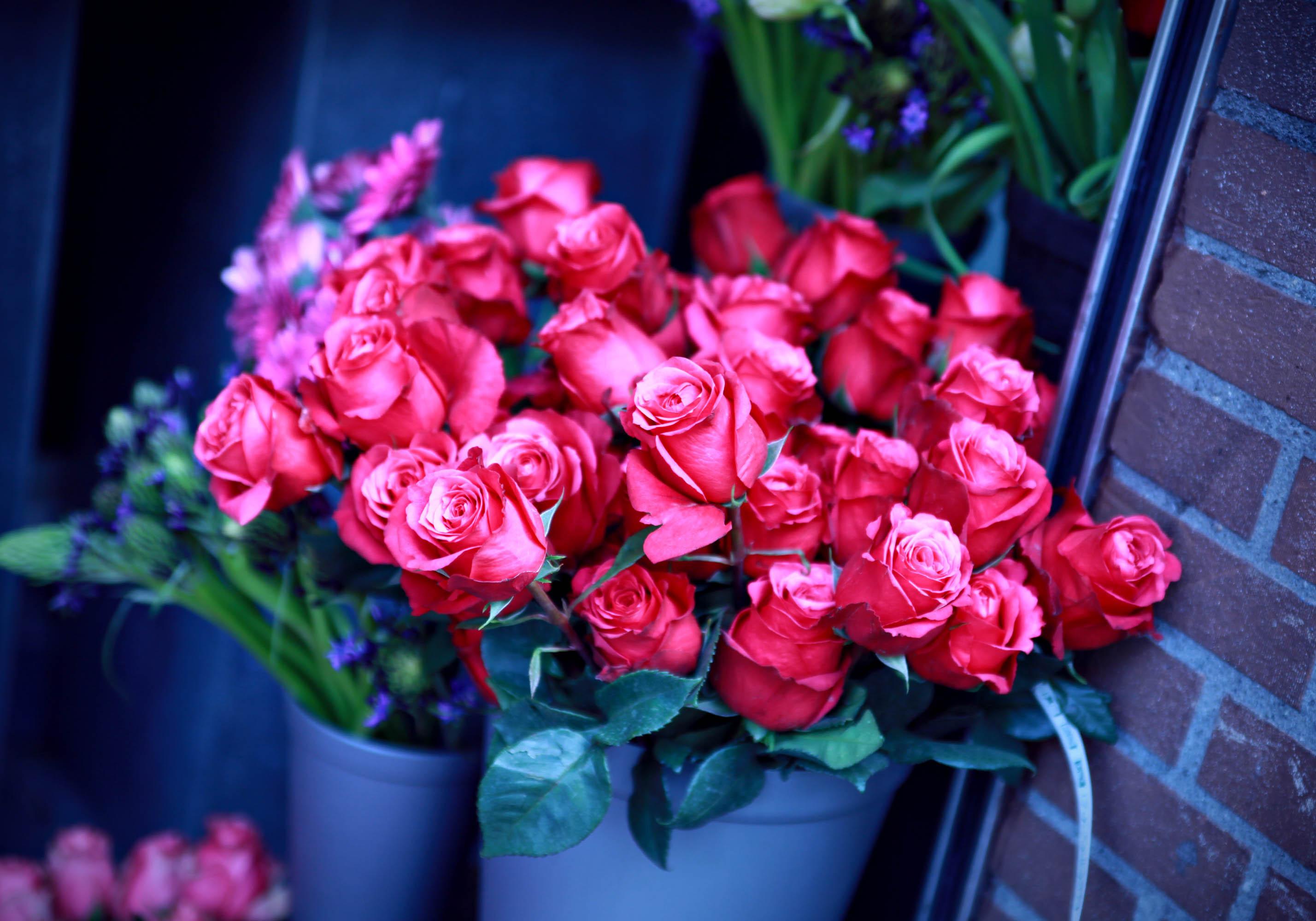 Обои цветы 1366x768 на рабочий стол скачать цветы обои 1366x768 ...