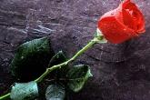 Wa11papers.ru_flowers_1280x1024_053
