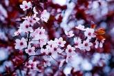 Wa11papers.ru_flowers_1440x900_001