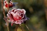 Wa11papers.ru_flowers_1530x1020_107