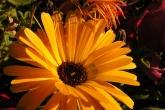 Wa11papers.ru_flowers_1600x1200_004