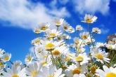 Wa11papers.ru_flowers_1600x1200_006