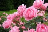 Wa11papers.ru_flowers_1600x1200_015