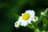 Wa11papers.ru_flowers_1600x1200_019