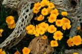 Wa11papers.ru_flowers_1600x1200_022
