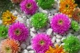 Wa11papers.ru_flowers_1600x1200_027