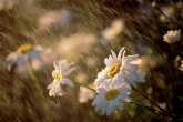 Wa11papers.ru_flowers_1600x1200_042