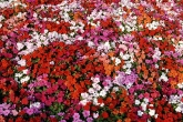 Wa11papers.ru_flowers_1600x1200_080