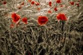 Wa11papers.ru_flowers_1600x1200_081