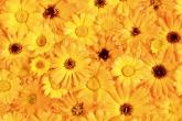Wa11papers.ru_flowers_1600x1200_083
