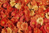 Wa11papers.ru_flowers_1600x1200_085