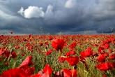 Wa11papers.ru_flowers_1680x1050_016